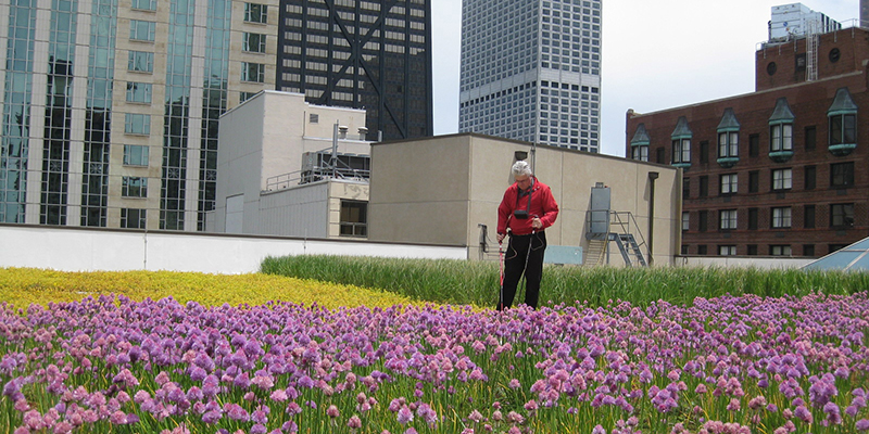 Skilled Green Roof Solutions Leak Test Technicians Use Low Voltage Electric  Pulses To Identify And