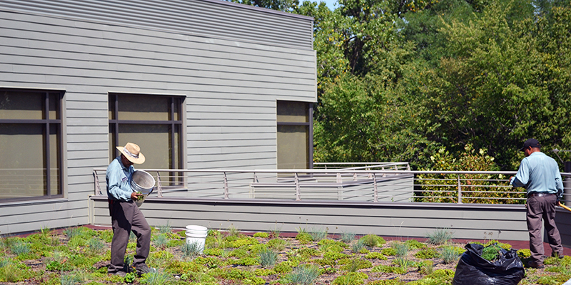 Media Amendments And Maintenance From Green Roof Solutions To Keep Green  Roofs And Roof Gardens Healthy