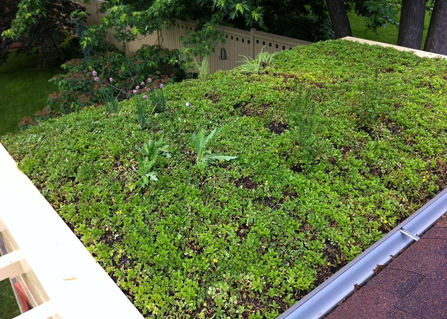 Custom Green Roof Edge